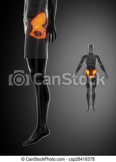 x--ray, pelve, pretas, varredura osso - csp28416378