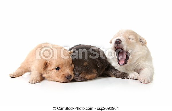 Yawning Cuddly Newborn Puppies - csp2692964