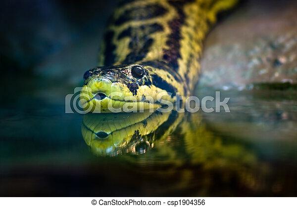 Yellow anaconda - csp1904356
