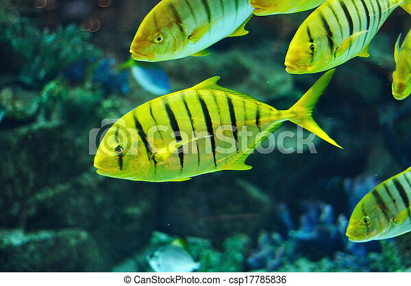 Black and yellow striped fish