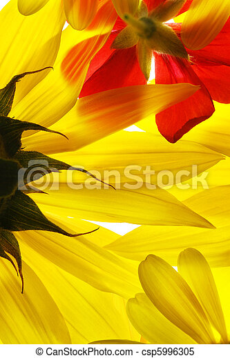Yellow and red summer flowers background. - csp5996305