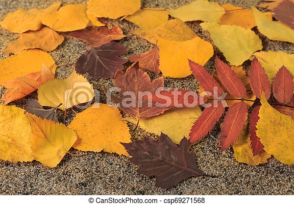 Yellow autumn leaves on the sand - csp69271568