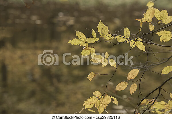 Yellow autumn leaves - csp29325116