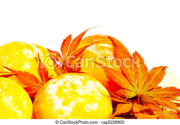 Yellow Autumn plums with scarlet Acer leaves - csp5228900