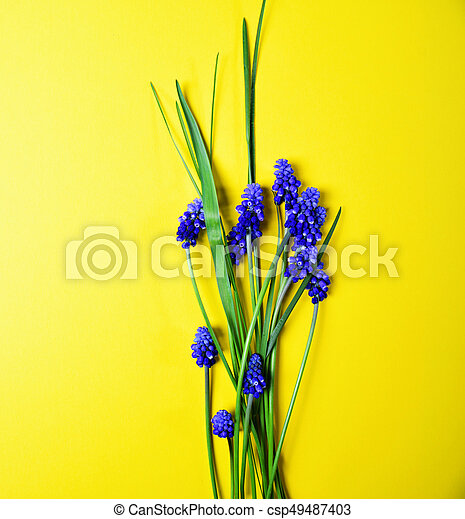 Yellow background with blue flowers - csp49487403