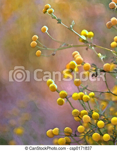 Yellow balls plant with yellow ball shaped flowers yellow balls csp0171837 mightylinksfo