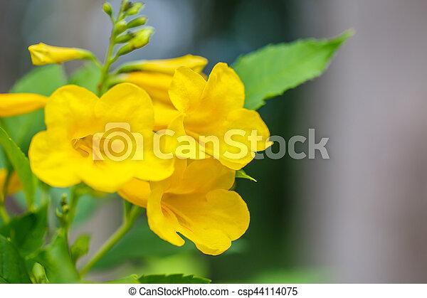 Yellow bells flower yellow bells flower csp44114075 mightylinksfo