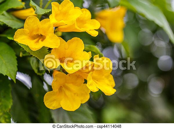 Yellow bells flower yellow bells flower csp44114048 mightylinksfo