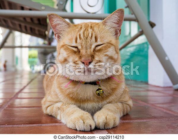 Yellow bengal cat - csp29114210