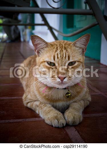Yellow bengal cat - csp29114190