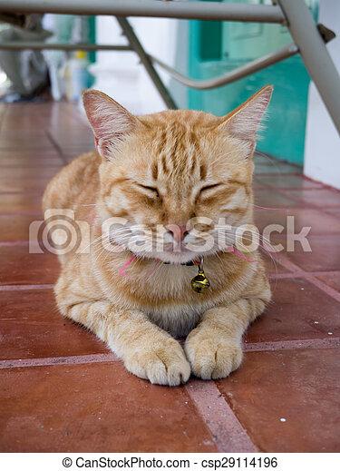 Yellow bengal cat - csp29114196