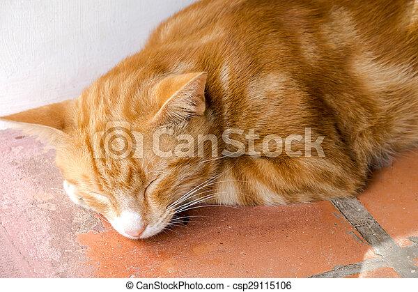 Yellow bengal cat - csp29115106