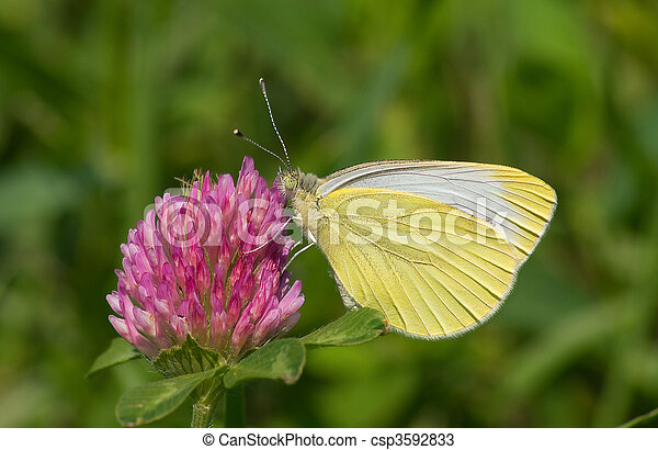 Yellow butterfly - csp3592833