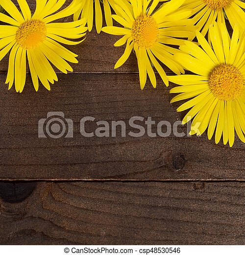 Yellow chamomile on wooden background - csp48530546