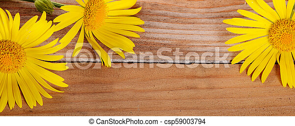Yellow chamomile on wooden background - csp59003794