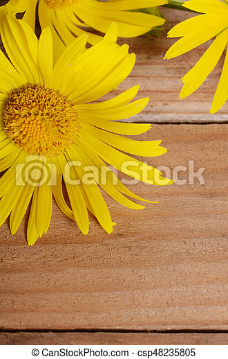 Yellow chamomile on wooden background - csp48235805
