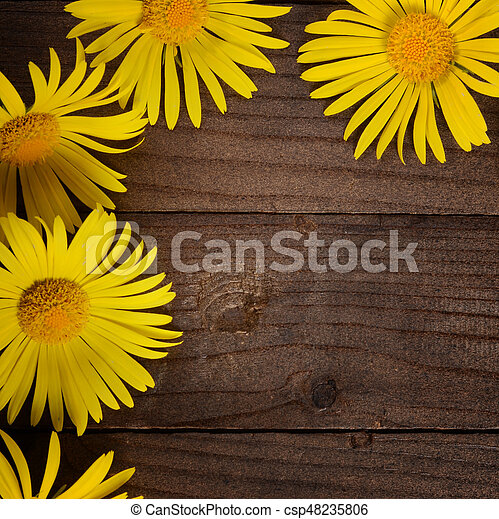Yellow chamomile on wooden background - csp48235806