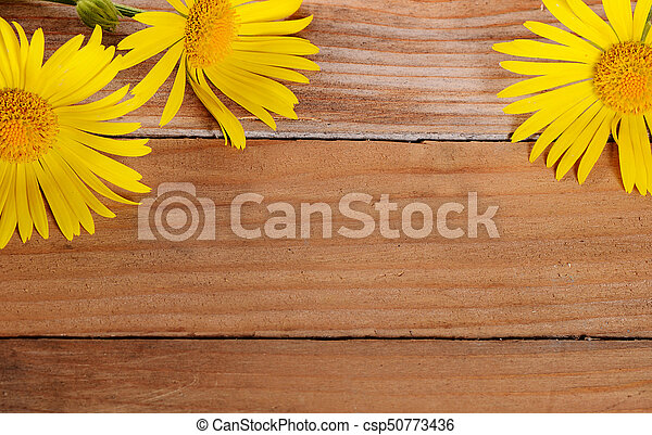 Yellow chamomile on wooden background - csp50773436