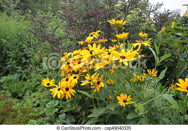 Yellow daisies - csp49040335