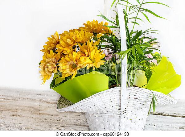 Yellow daisies - csp60124133