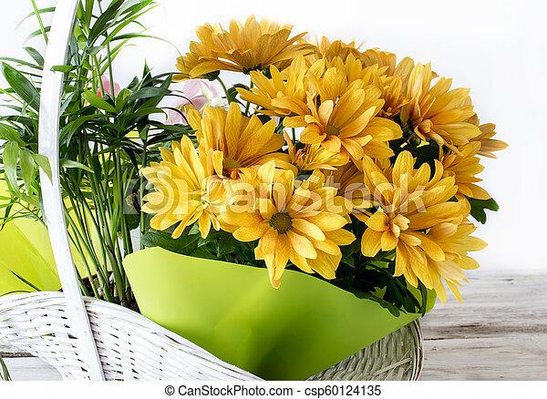 Yellow daisies - csp60124135