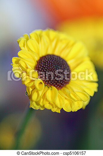 Yellow Daisy Yellow Daisy With Brown Centre Shallow Depth Of Field Canstock Check out our brown center daisy selection for the very best in unique or custom, handmade pieces from our shops. can stock photo