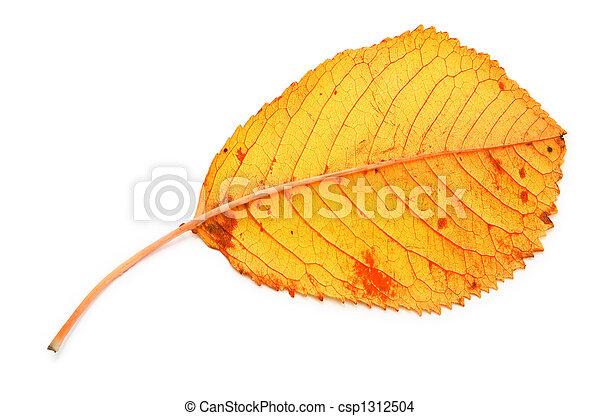 yellow dry fall leaf - csp1312504
