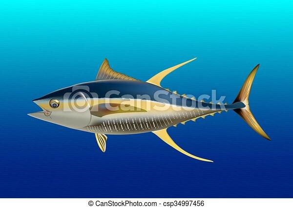 Yellow fin tuna - csp34997456