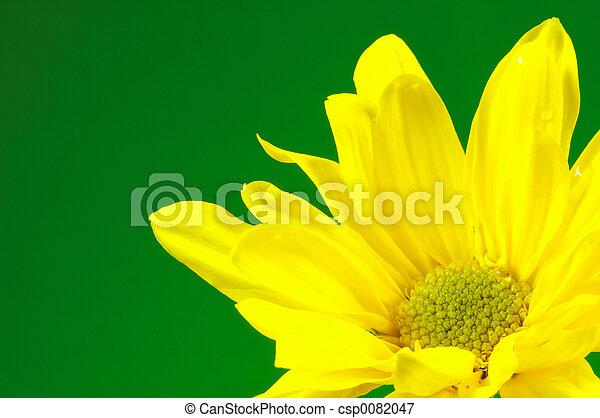Yellow Flower 2 - csp0082047