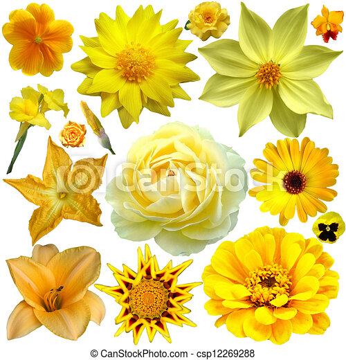 Yellow flower collage yellow flower collage mightylinksfo