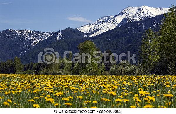 Yellow Flower Farm Snow Mountain Countryside Montana - csp2460803
