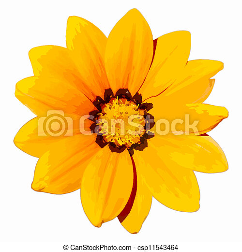 Yellow flower head isolated on a white background eps10 clip art yellow flower head csp11543464 mightylinksfo