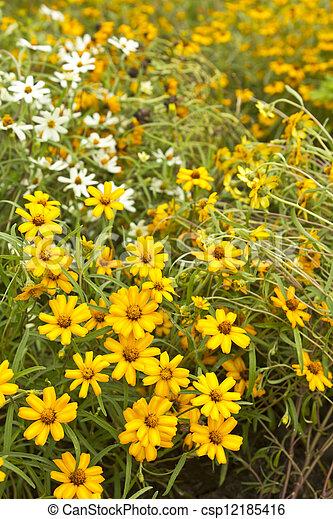 Yellow Flower, in the garden - csp12185416