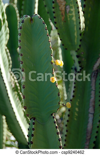 Yellow flower on cactus plant green tall cactus plant with small yellow flower on cactus plant csp9240462 mightylinksfo