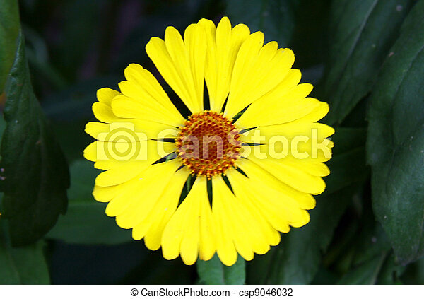 Yellow flower center yellow flowers green background yellow flower csp9046032 mightylinksfo