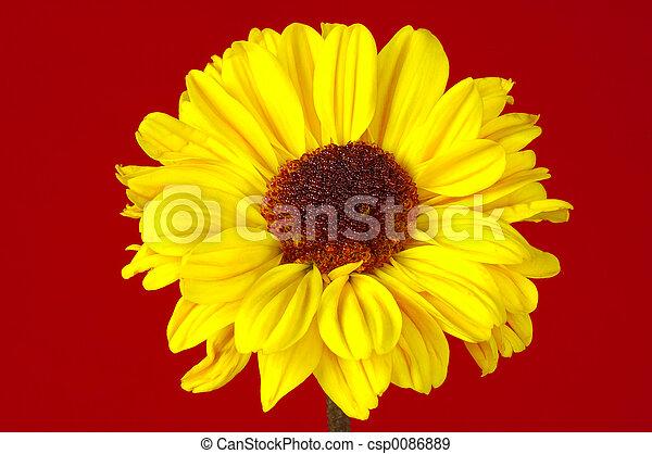 Yellow Flower - csp0086889