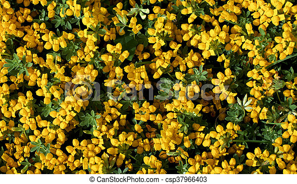 Yellow Flowers Background Background Of Little Yellow Flowers With
