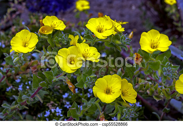 Yellow flowers close up little yellow flowers in a flowerbed yellow flowers close up csp55528866 mightylinksfo