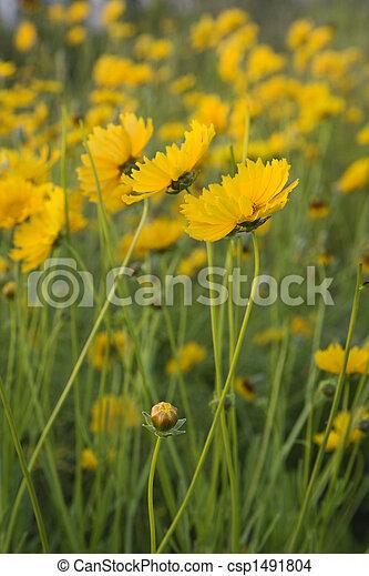 Yellow Flowers Growing Wild