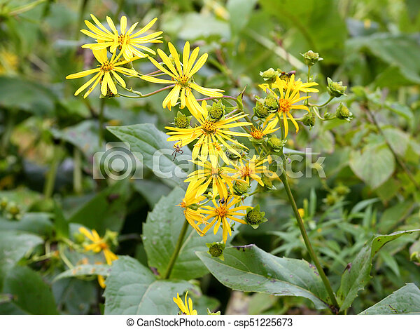 Yellow flowers in a field with a spider picture search photo yellow flowers in a field csp51225673 mightylinksfo