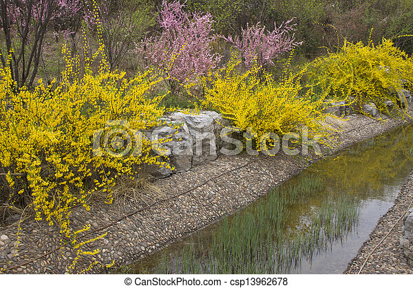 yellow flowers in a garden, china - csp13962678