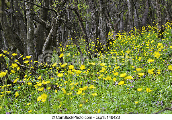 Yellow flowers in the forest - csp15148423
