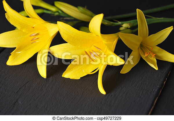 Beautiful yellow flowers on a black background yellow flowers on a black background csp49727229 mightylinksfo