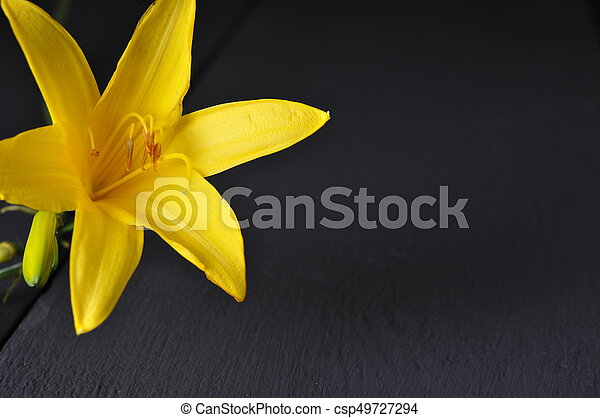 Beautiful yellow flowers on a black background yellow flowers on a black background csp49727294 mightylinksfo