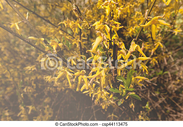 Bush with small yellow flowers on a branches note shallow depth of yellow flowers on a branches csp44113475 mightylinksfo