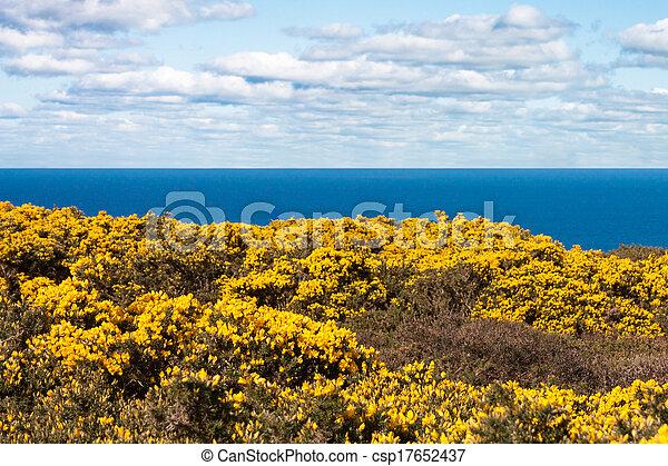 Yellow flowers on howth cliffs in ireland against a cloudy deep blue yellow flowers on howth cliffs in ireland csp17652437 mightylinksfo