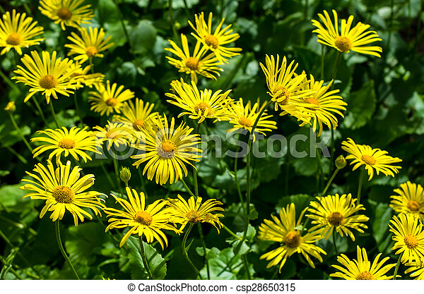 yellow flowers - csp28650315