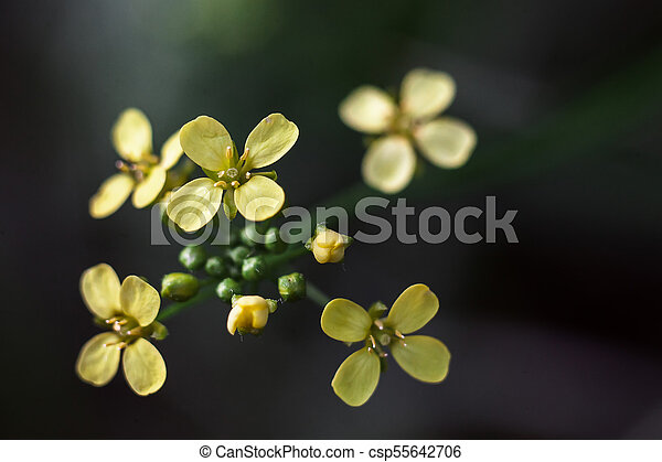 The bouquet is branched at the end of the branch yellow stock yellow flowers rounded with 4 petals csp55642706 mightylinksfo Choice Image