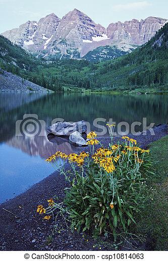 Yellow Flowers - csp10814063