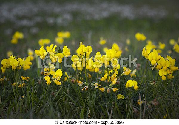 Yellow flowers yellow flowers in grass yellow flowers csp6555896 mightylinksfo